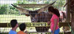 Wild Florida's Wildlife Park