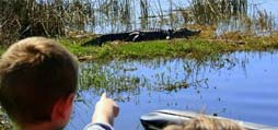 Stalking Gators at 40mph