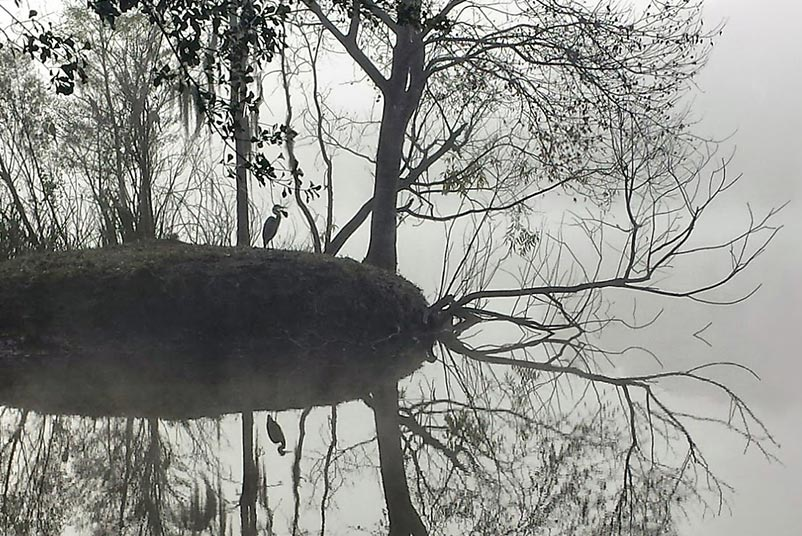 A black and white photograph of a tree standing at the water's edge, reflected in the water in Gainesville, Florida