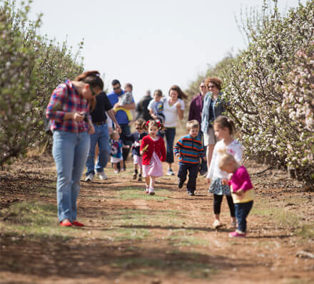 Lubbock, Texas, Apple Country at Hi-Plains Orchards