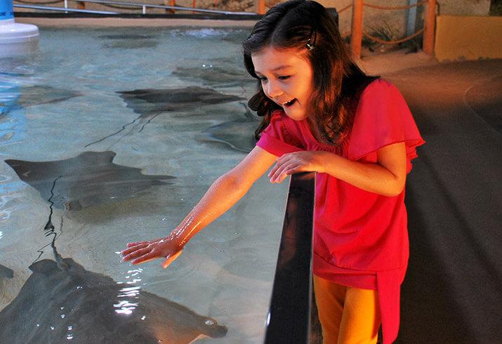 Interact with the stingrays at the Florida Aquarium