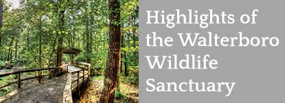 Highlights of the Walterboro Wildlife Sanctuary