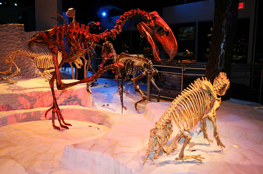Florida Fossils: Evolution of Life and Land exhibit at Florida Museum of Natural History in Gainesville.