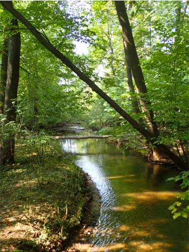 Lush green trees lean over the water in in Coffee Creek Watershed Preserve in Indiana Dunes, Indiana