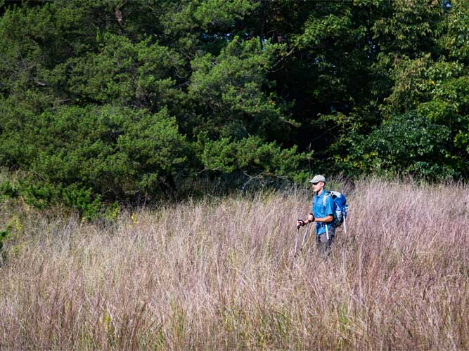 A man hikes through tall grasses with green trees in the background in Indiana Dunes, Indiana