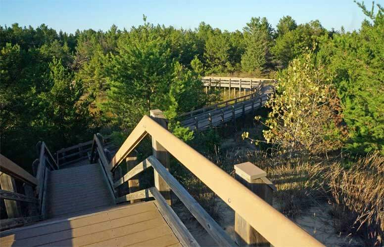 A wooden walkway with stairs winds through green trees in Indiana Dunes, Indiana