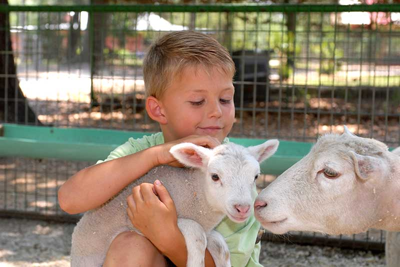 Boy petting a sheep at Green Meadows Petting Farm in Kissimmee, Florida