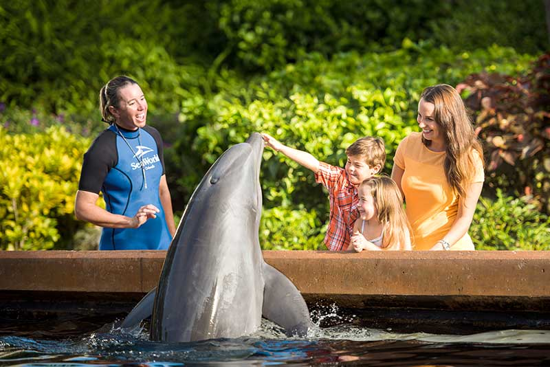 A dolphin with a family and trainer at SeaWorld in Central Florida