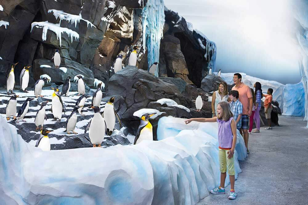 Up close with penguins at SeaWorld's Empire of the Penguin near Kissimmee, Florida