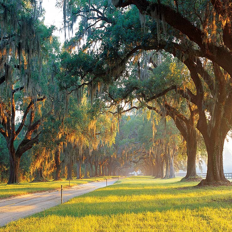 Avenue of Oaks at Boone Hall Plantation in Mount Pleasant, South Carolina