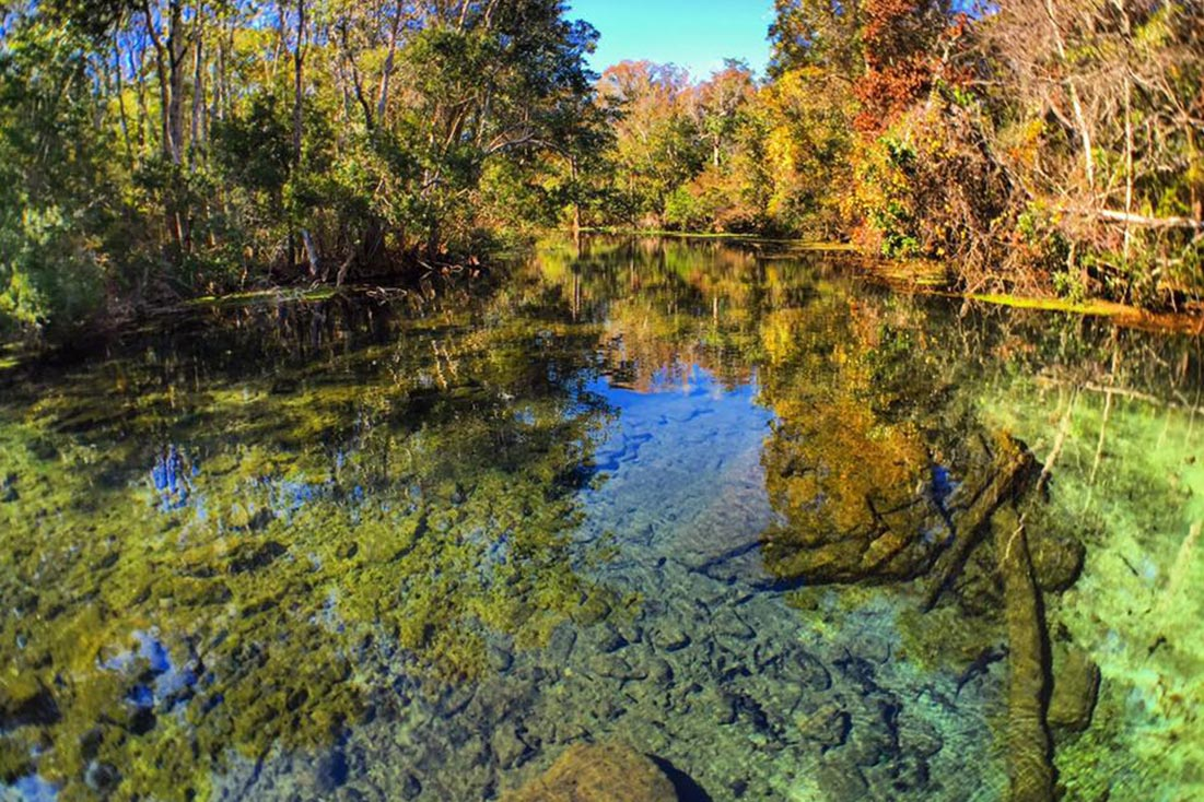 Clear waters of Wacissa River in Tallahassee, Florida