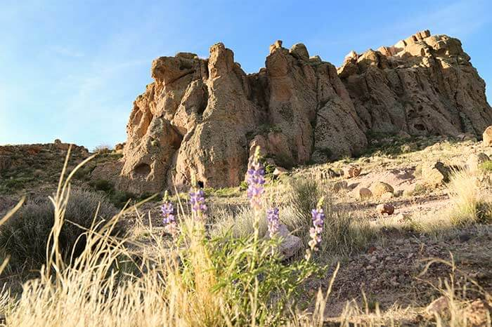 The view of a mountain and blooming lupine wildflowers along the Monolith Garden Trail in Kingman, Arizona