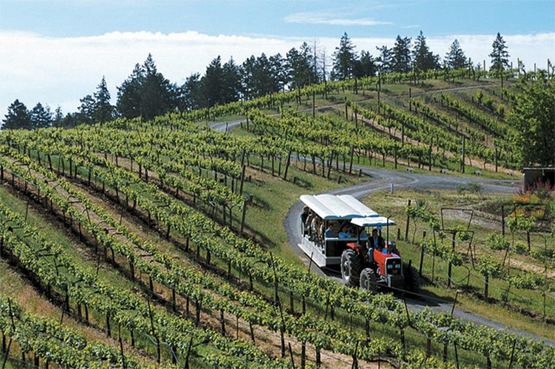 Tractor tour bringing guests through a Sonoma Valley, California vineyard