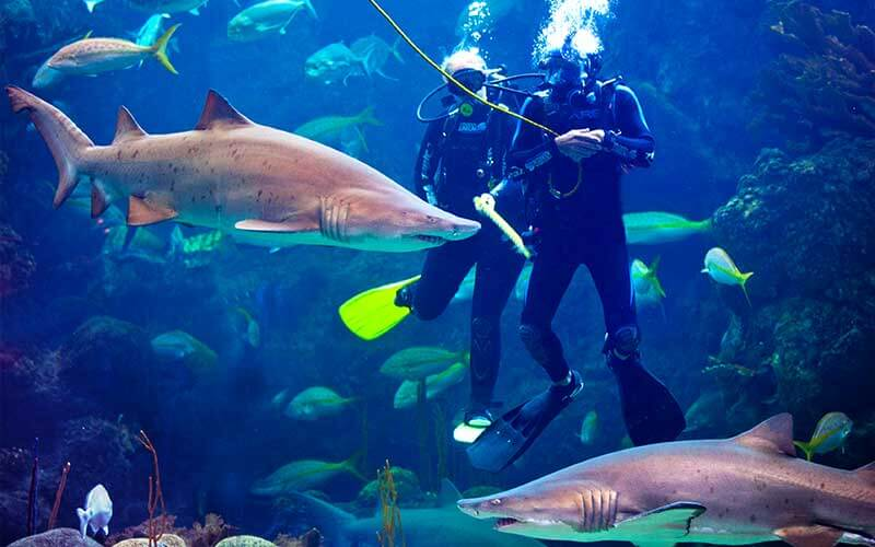 Divers swim with sharks at The Florida Aquarium, Tampa