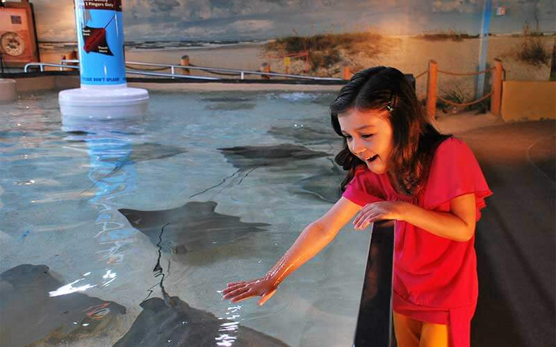 Girl pets stingrays in touch tank at The Florida Aquarium, Tampa