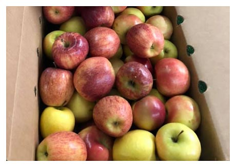 A box of red and green apples from Orchard Hill Farm and Country Store in Lewiston, Illinois