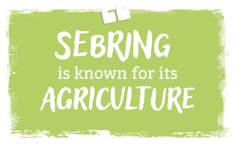 Sebring is known for its agriculture and wanting to experience that, we headed out to the Ranch & Harvest Trail…