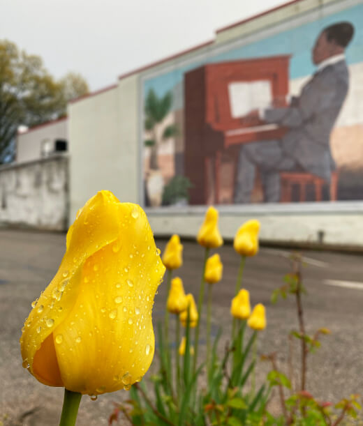 A yellow tulip in the foreground of the Scott Joplin Mural in Sedalia, MO.
