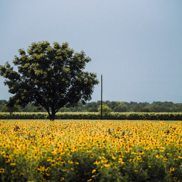 fredricksburg wildseed farms